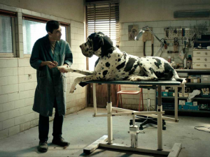 Dogman (V.O.S.E.)
